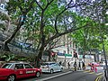HK Mid-Levels Bonham Road Banyan trees HKU campus crossing walkway Apr-2013.JPG