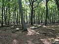 Hambach forest 29.jpg