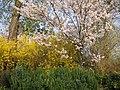 Hampton Court palace Gardens 03 TTaylor05.JPG