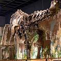 Haplocanthosaurus delfsi.jpg