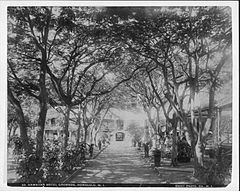 Hawaiian Hotel Grounds, photograph by Frank Davey (PP-42-8-014).jpg