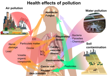 pollution  overview of main health effects on humans from some common types of pollution