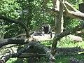 Helarctos malayanus in Burgers' Zoo (Rimba) (1).JPG