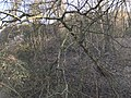 Hengelose-berg3.jpg