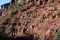 Hermit Shale with Plants - Flickr - brewbooks.jpg