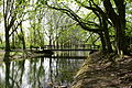 Herne - Schlosspark Strünkede 29 ies.jpg