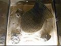 Herne Archäologiemuseum127571.jpg