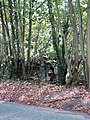 Hiding behind trees - geograph.org.uk - 1020975.jpg