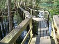 Highland Hammocks SP Swamp Trail05.jpg
