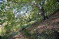 Hills forest (3337720561).jpg