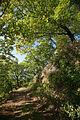 Hills forest (3338549986).jpg