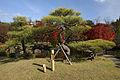 Himeji Koukoen38nt3200.jpg