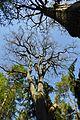 Hirschgehege im Forst Rundshorn-Fuhrberg 03.jpg