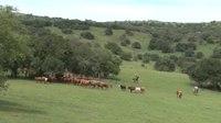 File:Histórias do ovelheiro gaúcho - Rio Grande Rural.webm