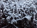 Hoar frost twigs of the hedgerow 1.jpg