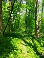 Holodny Yar forest 06.jpg