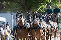 Horse Drawn Carriage (4946483082).jpg