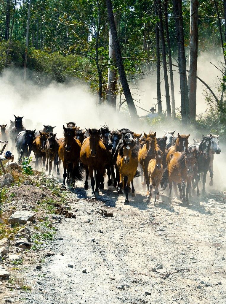 IX Rapa das Bestas do Xiabre en Catoira