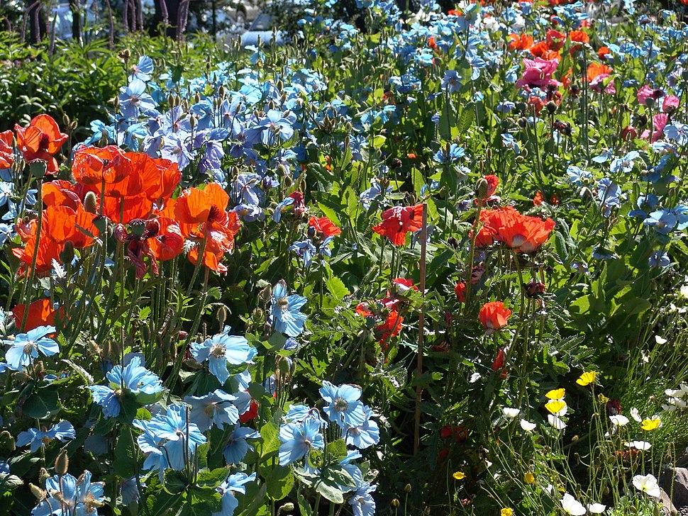 Iceland Plants 4885