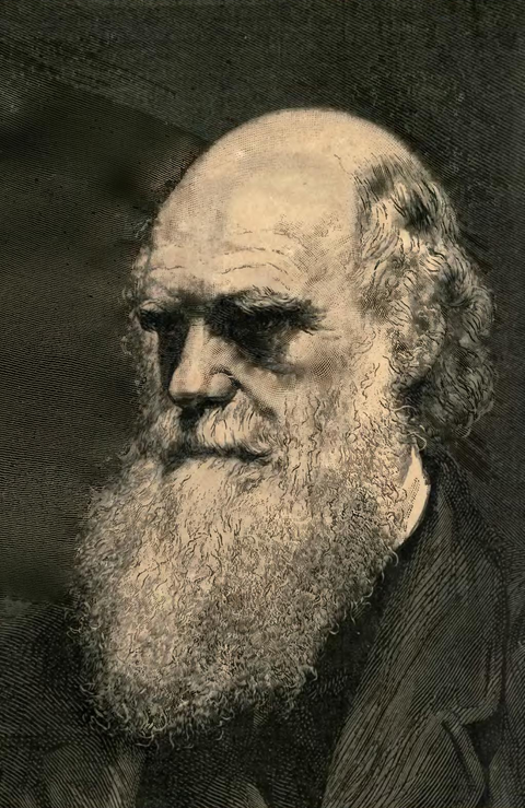 Illustration Darwin - La Descendance de l'homme, 1881-p8.png
