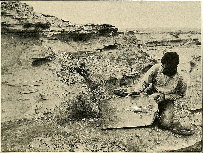 "File:Image from page 22 of ""Water reptiles of the past and present"" (1914) (14772630252).jpg"
