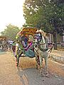 India-6052 - Flickr - archer10 (Dennis).jpg