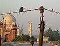 India - Agra - 013 (2146742883).jpg