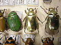 Insect Safari - beetle 39.jpg