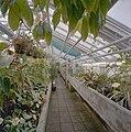 Interieur, overzicht plantenkas - Delft - 20404917 - RCE.jpg