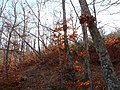 Invierno 2011 en Tejera negra - panoramio (15).jpg