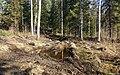 It is Now Muddy... - panoramio.jpg