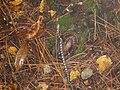 JLSP snake.JPG
