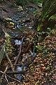 Jedovnický potok těsně před propadáním, národní přírodní rezervace Rudické propadání, okres Blansko.jpg