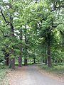 Jungle Walk.jpg