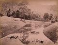 KITLV - 402633 - Park, presumably at Singapore - circa 1890.tif