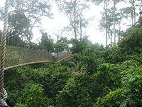 Kakum National Park.jpg