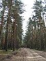 Kalininsky District, Tver Oblast, Russia - panoramio.jpg