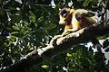 Kalo Mukho Hanuman (4163511442).jpg