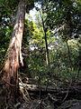 Kasugayama Primeval Forest 02.jpg