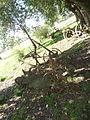 Keen - museo rural 06.JPG