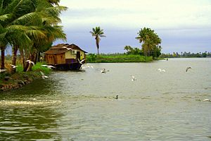 view of Kerala Backwaters
