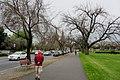 King William Road, North Adelaide.jpg