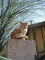 Kitty 05.jpg