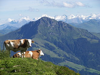 Kitzbüheler Horn - View of the Kitzbüheler Horn from the Hochgrubach cirque on the Wilder Kaiser