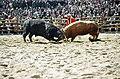 Korea-2006 Cheongdo Bullfighting Festival-01.jpg