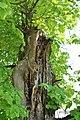 Kurivtsi-Lypa-Franka-15058370.jpg