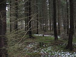 Kuusi Ruotsiksi