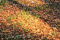 Kvetoucí sněženky v PP Sněženky ve Vysokém lese 04.jpg