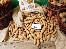 Image illustrative de l'article Ratte (pomme de terre)