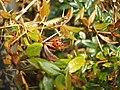 Ladybird - geograph.org.uk - 379010.jpg